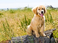 Pet Friendly Campgrounds | North Carolina