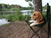 Pet Etiquette at Campgrounds and RV Parks