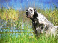 Pet Friendly Campgrounds | Virginia
