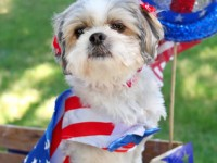 Dogs and the Grand Old Fourth of July